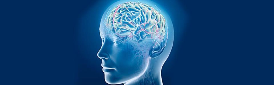 Circulatie cerebrala; periferica